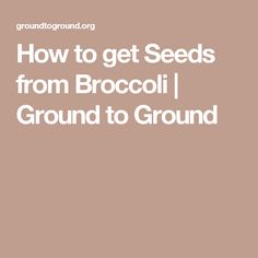 How to get Seeds from Broccoli | Ground to Ground