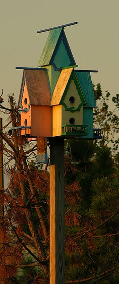 These charming little birdhouses are color coordinated to match the row of 4 shoppes in West Cape May.  You cant miss them, but most folks do miss this.  The birdhouses are perched up rather high and towards the back of the parking lot.  Take a peek next time you're at these shoppes.