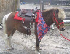 Pony rentals, Pony Parties, Children's Parties NJ Kids Parties, Petting zoo…