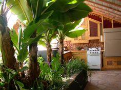 garden in the kitchen...cool :)