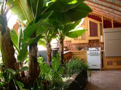 pictures of the inside of a cob house | The Cob Gallery Love the outside/ inside! How fun would it be to have an herb garden in your kitchen/