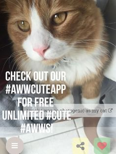 Get our #awwcuteapp from your appstore or buff.ly/2jUA3RR for unlimited free #awws   http://ift.tt/2kalcWL