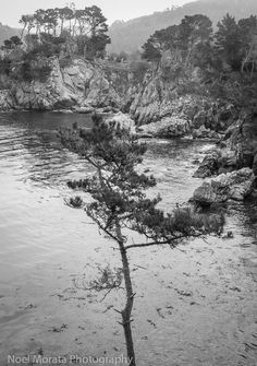 Point Lobos State Reserve in black and white | Travel Photo Discovery #landscape #PointLobos #monterey