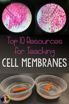 10 Resources for Teaching Cell Membranes Biology Lessons, Science Lessons, Life Science, Science Experiments, Science Ideas, Weird Science, Science Resources, Earth Science, Science Projects