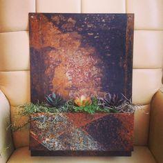 Metal succulent garden wall hanging