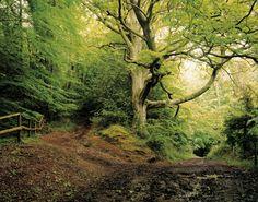 Journey Through the British Isles. Set 2 Archives - Harry Cory Wright Harry Cory Wright