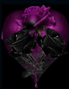 How Beautiful is The Black Rose and The Red Roses. Gothic Wallpaper, Purple Wallpaper, Heart Wallpaper, Flower Wallpaper, Beautiful Flowers Wallpapers, Beautiful Nature Wallpaper, Pretty Wallpapers, Beautiful Roses, Purple Love
