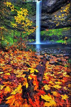 Autumn in Silver Falls