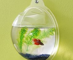 Wall Mounted Fish Bowl - Your goldfish will feel like a big shot in a high rise penthouse when you move him into the wall mounted fish bowl. Apart from giving your pet a lavish view, the fish bowl brings a stylish touch to the room and makes for a great conversation piece as well. $14.20