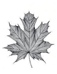 Afbeeldingsresultaat voor ink drawing leaves