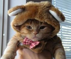 Teddy-Cat......omg how precious. Need this for prince lol!