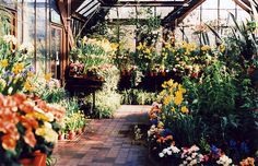 I really really want a garden of my own, or a flower farm.