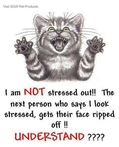 stressed out cat. Stressed Out Quotes, Stress Quotes, Stress Humor, Outing Quotes, Photo Fails, Who Said, I Can Relate, Make Me Smile, Cool Pictures