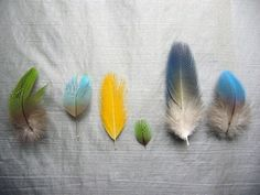 .Inspiration from our feathered friends.