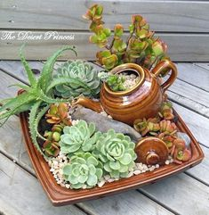 Image result for succulent arrangements
