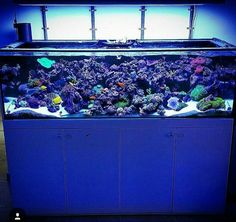 Reef Aquarium, Saltwater Aquarium, Reef Tanks, Marine Tank, Keep Swimming, Aquascaping, Salt And Water, Tropical Fish, Fish Tank