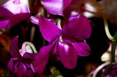 My work; Orchids