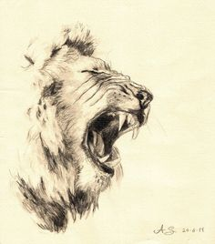 Pencil Drawn Lion | Lion - watersoluble pencil by ~AndreaSchepisi on deviantART
