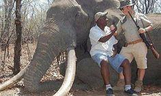 """""""O GRITO DO BICHO"""": Caçador mata maior elefante já visto em décadas no..."""