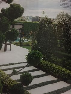 Mondo grass and pavers