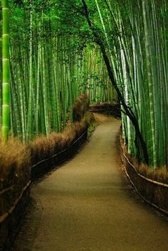 Bamboo forest in Arashiyama district, Kyoto, Japan.A walk through the serene green Bamboo forests in Arashiyama district in Kyoto Japan. Places Around The World, Oh The Places You'll Go, Places To Travel, Places To Visit, Around The Worlds, Kanazawa, Japan Travel, Pathways, Wonders Of The World