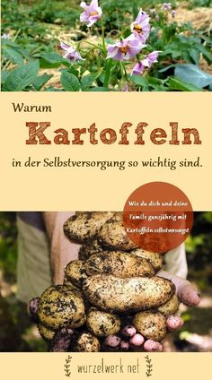 Warum Kartoffeln in der Selbstversorgung so wichtig sind Self-sufficiency: Why potatoes are so important in self-sufficiency and how you manage to pro. Amazing Gardens, Beautiful Gardens, Le Baobab, Climbing Hydrangea, Barbecue Area, Mini Farm, Palmiers, Greenhouse Gardening, Pallets Garden