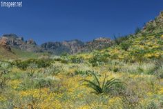 Spring time in Big Bend National Park, Texas. Photography by Tim Speer