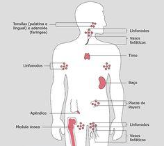 Sistema Imunológico