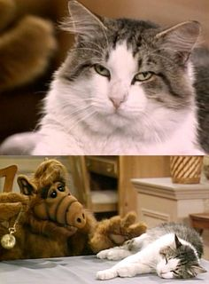 """""""Göz kapakların ağırlaşıyor,iyice uyku bastırıyor,sen artık bir kedi değilsin,sen bifteksin.""""    """"Alf"""" (1986-1990) Paul Fusco (Seslendirme :Sinan Divrik-Müşfik Kenter ) *"""
