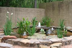 Photos of Rain Gardens | Rain gardens are fitted for abrupt terrain and for them planting ...