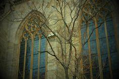 Stephansdom windows