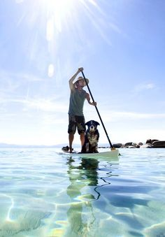 SUP >> Ocean << Sun >> Dog << Stand up paddle boarding