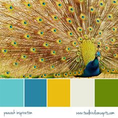 Peacock color palette : blue in kitchen with the black, teal on 2 accent walls. Change celery green in dining room to this army green, and all the light blue walls a gold color. Will it go well with mounts? Peacock Color Scheme, Colour Pallette, Peacock Colors, Peacock Art, Peacock Theme, Peacock Feathers, Peacock Blue, Bedroom Black, Gold Bedroom