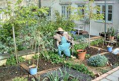 8 Adorable Tricks: Corner Garden Ideas Summer backyard garden planters how to build. Backyard Vegetable Gardens, Vegetable Garden Design, Garden Planters, Herb Garden, Container Garden, Patio Plants, Garden Boxes, Glass Garden, Rose Garden Design