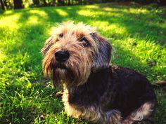 #pies  #dog #dogportrait #dogphoto