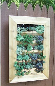 Cedar Wood Wall Planter for succulents or an herb garden!  Great way to save space on your patio or for apartment gardening. #wayfair #shopstyle #sponsored