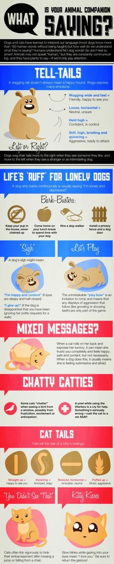 What Is Your Pet Saying Infographic... didn't say anything about wiggling butts though!