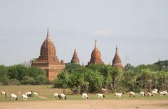 Electric Explorer: Myanmar - Trufflepig