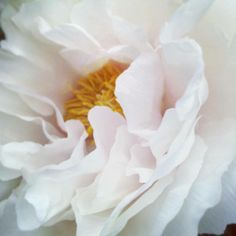 peony profile by Heather Ross