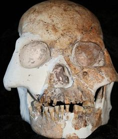 One of the skulls found in 'Red Deer Cave' in China - researchers say that the skulls have a mixture of ancient and modern features    Read more: http://www.dailymail.co.uk/sciencetech/article-2114867/Fossil-suggests-new-hominid-species-Stone-Age-cavemen-Red-deer-people-discovered-China.