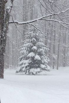 WINTER in the FOREST!! BEAUTIFUL!!
