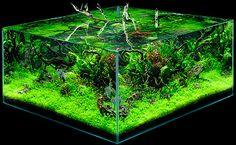 Aquacube - Fabio Ghidini Aqua - Foresta Amazzonica: Massimo Faberi ADA Aquarium 2007 #aquarium