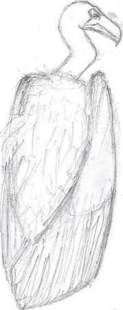 Vulture Sketch by Max Frances