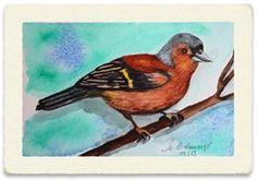 """Assista ao divertido video """"Os Pássaros"""" com aquarelas minhas de pássaros. ( Maria Cecilia Camargo )  https://www.facebook.com/mceciliacamargo/videos/1242895159159440/  #pássaros #aquarelas #video #MariaCeciliaCamargo"""