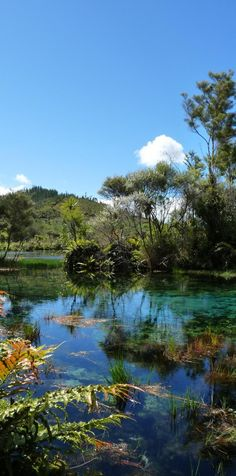 Pupu Springs - NZ