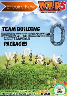 Now is the perfect time of year to re-energise your staff so you can reap the rewards of their full potential. Let us put a package together that is specifically designed to help your company reach its goals! World Class, Our World, Team Building, Teamwork, Did You Know, Trip Advisor, Packaging, Goals, Activities