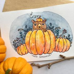 looking for the perfect pumpkin #tania_autumndraw #september #inspiration #pumpkin #watercolor #picame #illustration #painting #bear #artistsoninstagram