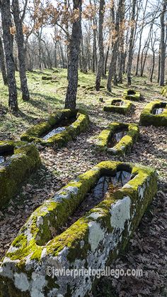 Tumbas y bosques en el Alto Arlanza (Burgos) Ancient Ruins, Fantasy Landscape, Ancient Architecture, Spain Travel, Abandoned Places, Places To See, The Good Place, Around The Worlds, Tours