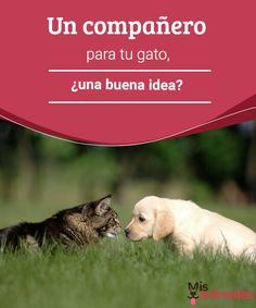 Un compañero para tu gato, ¿una buena idea?  ¿Has decidido que es el momento de adoptar un compañero para tu gato? Lee los consejos que tenemos para que el proceso de convivencia sea todo un éxito. #compañeros #idea #convivencia #consejos