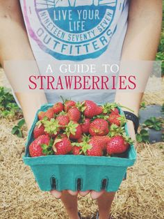 A Guide To Strawberries. Everything you need to know about strawberry season including lots of delicious strawberry recipes to try out!   @lovemysilk #inspired #sponsored